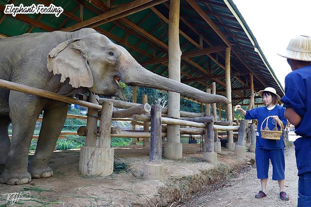 Maesa Elephant Feeding Tiffany Yong