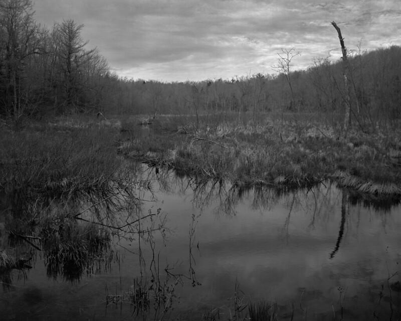 Beaver Pond, Dusk