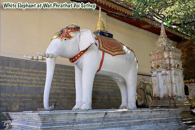 White Elephant at Wat Phrathat Doi Suthep