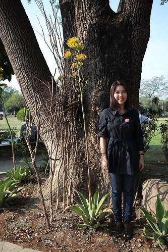 龍舌蘭、瓊麻:一直一直往上開花