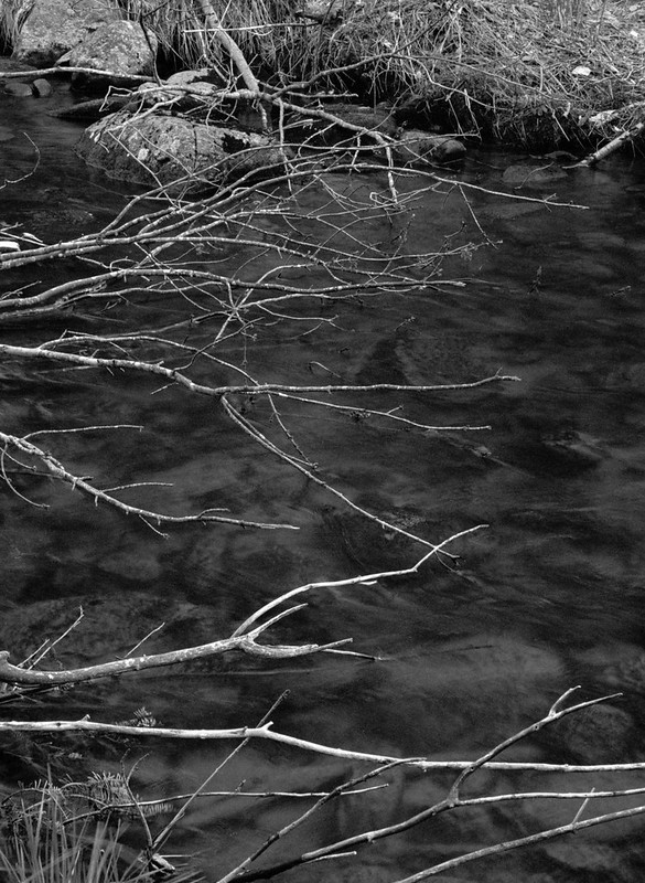 Branches from the Beaver Dam