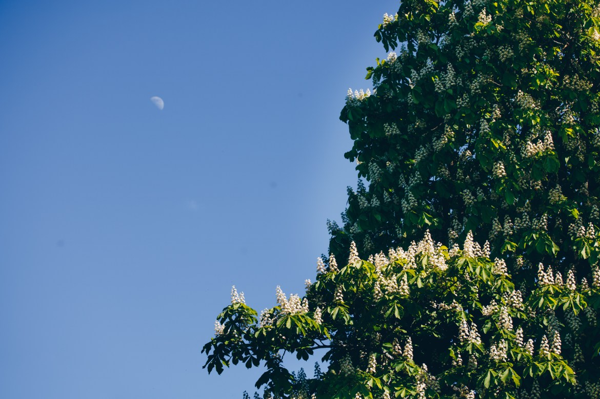 Chestnut tree under the moon - reaktionista.se