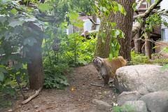 Mira im Affenwald