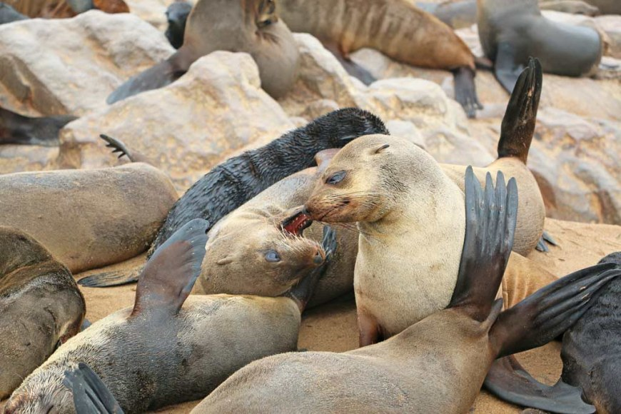 5. Cape-Fur-seals-Hermanus-South-Africa-travel-itinerary