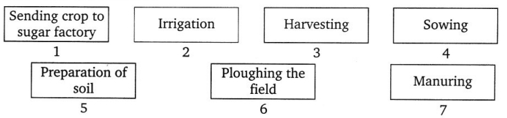 CBSE Class 8 Science Crop Production and Management Worksheets 1