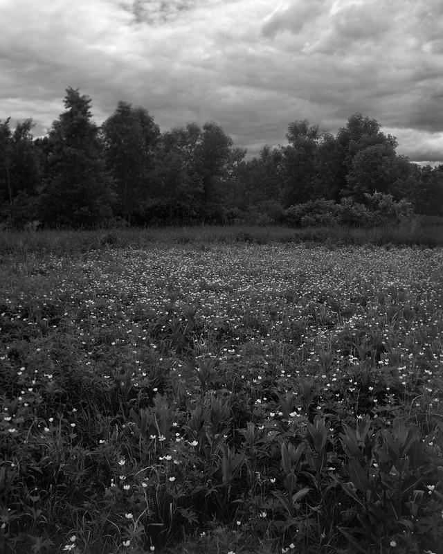 Meadow Walk 2