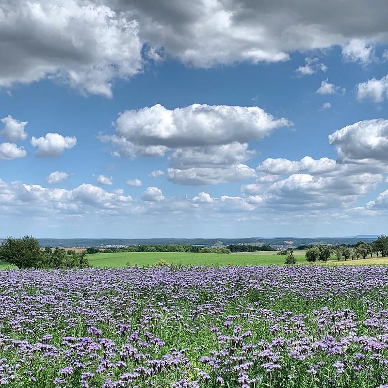 Blühende Landschaft vor sächsischem Himmel