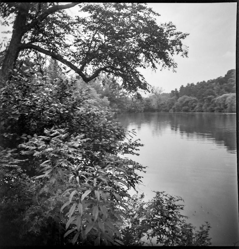 Biltmore lagoon, reflections, Biltmore Estate, Asheville, NC, Eho Altissa box camera, Foma 200, Moersch Eco film developer, 6.21.20
