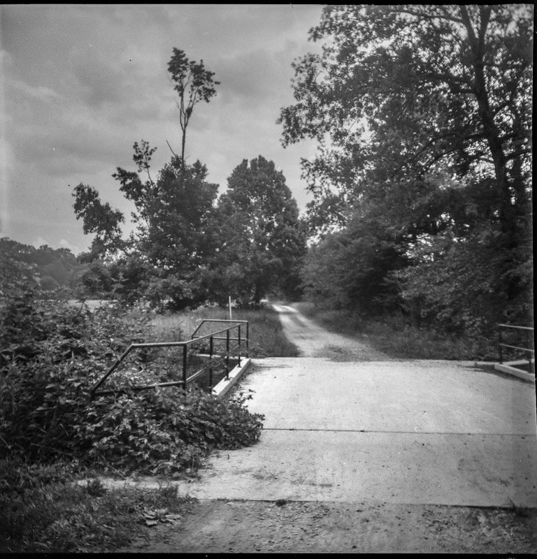 tall distant tree, dirt roadway, paved bridge, metail railing, Biltmore Estate, Asheville, NC, Eho Altissa box camera, Foma 200, Moersch Eco film developer, 6.21.20 (1 of 1)