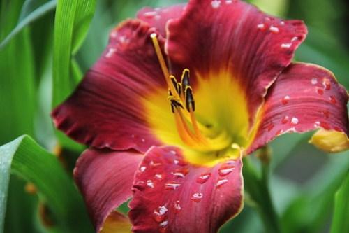 2020-06-28_Botanic_Garden_034