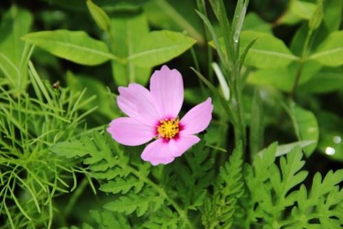 2020-06-28_Botanic_Garden_013