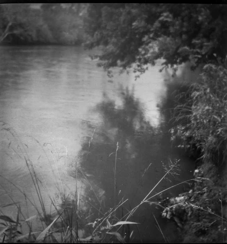 overhanging branches, reflections, tributary, French Broad River, Asheville, NC, Linden Lindar box camera, Foma 200, Moersch Eco film developer, 6.27.20