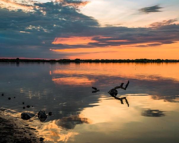 Jumping fish sunrise