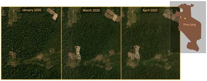 """衛星影像顯示,最近森林砍伐的範圍(左下方)已侵入普雷朗的IFL。資料來源:Planet Labs, Inc. """"Monthly /Quarterly Mosaics."""" Accessed through Global Forest Watch on May 11, 2020."""