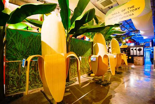 Hall of the Natural History of Banana The Catsup Museum