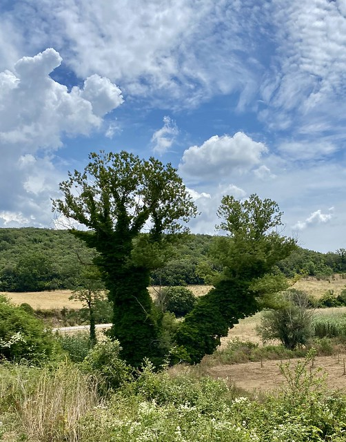 Zauberhafter Fingerbaum