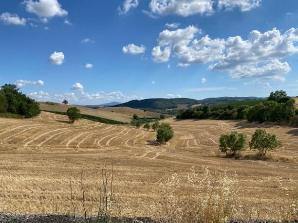 Hochsommerlich in der Toskana