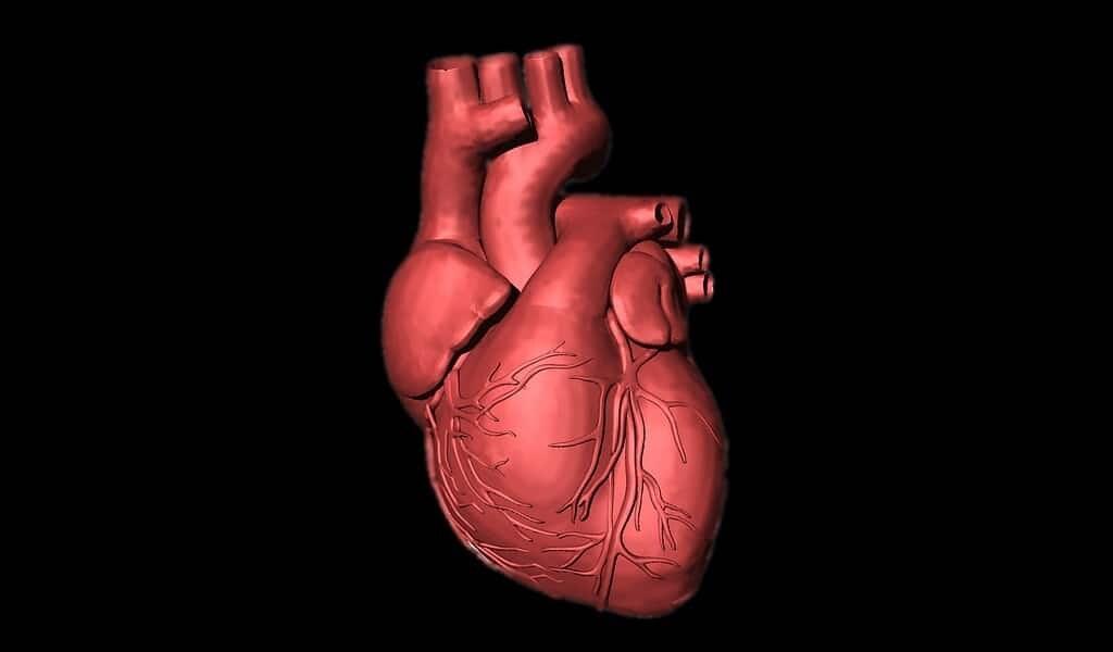 une-pompe-cardiaque-imprimée-avec-des-cellules-humaines