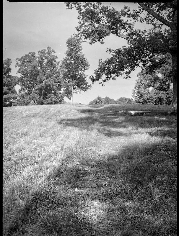 grassy pathway, tree forms, bench, grounds, Biltmore Estate, Asheville, NC, Mamiya 645 Pro, Fomapan 200, Moersch Eco film developer, 7.20.20
