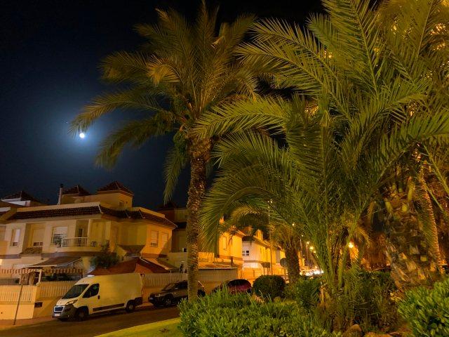 La palmera y la luna