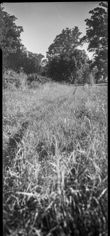 grass pathway, meadow, Biltmore Estate, Asheville, NC, Zeiss Ikon Cocarette, Kodak Tri-X 400, HC-110 developer, 8.17.20