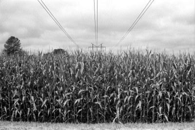 High-powered cornfield