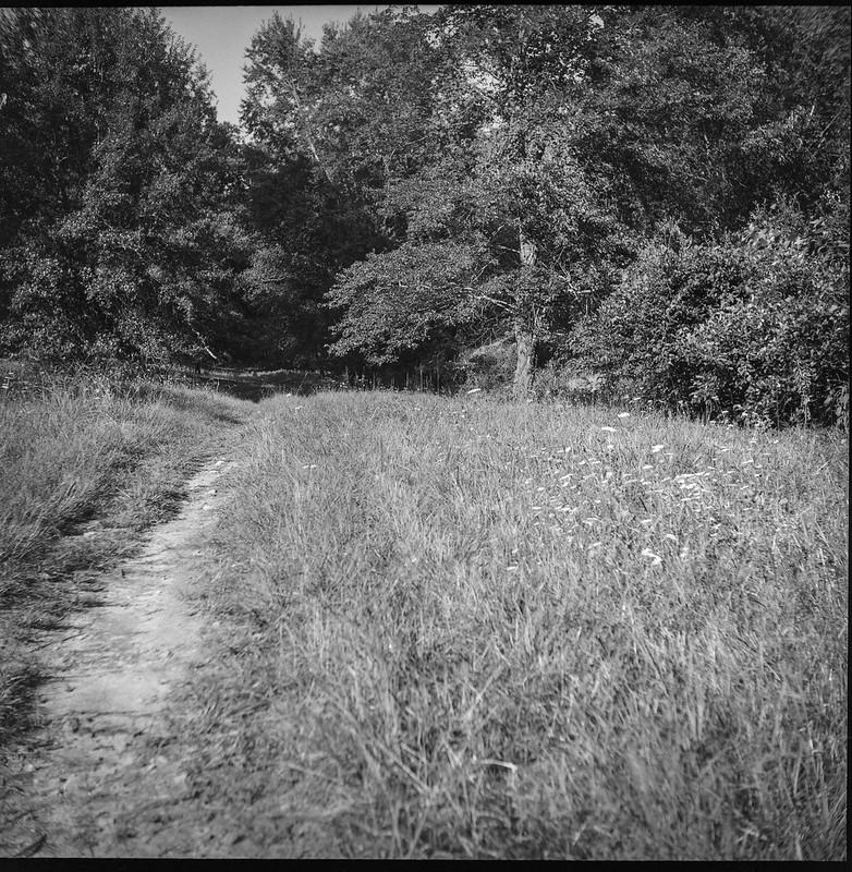 single lane dirt roadway, queen anne's lace, forest's edge, late light, Biltmore Estate, Asheville, NC, Ricohflex Dia M, Fomapan 200, Moersch Eco film dveloper, 8.17.20