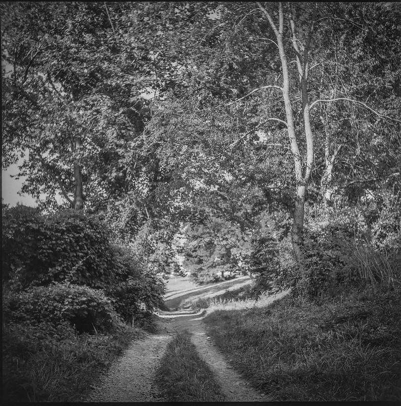 single lane dirt roadway, tall trees, late light, Biltmore Estate, Asheville, NC, Ricohflex Dia M, Fomapan 200, Moersch Eco film dveloper, 8.17.20