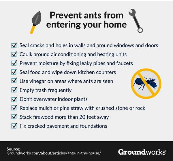 Groundworks ants-in-the-house-warning-signs