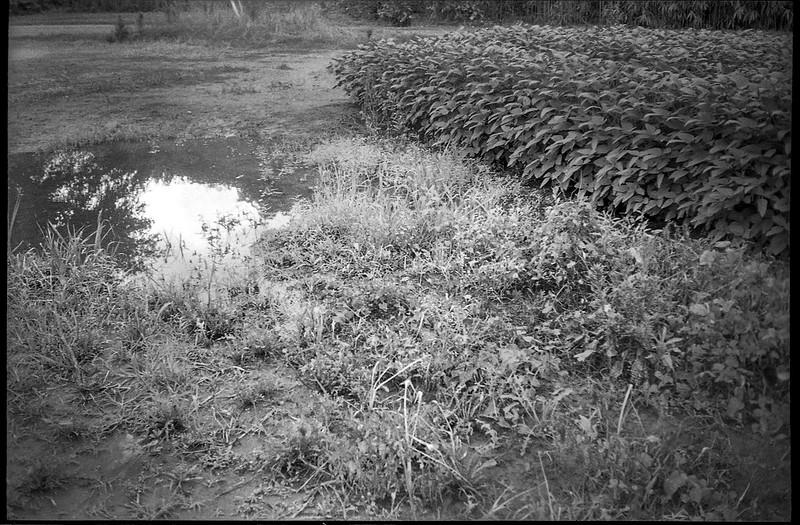 flooded farmland, reflection, Biltmore Estate, Asheville, NC, Minolta Freedom Dual 60, Kodak Tri-X 400, HC-110 developer, 8.21.20