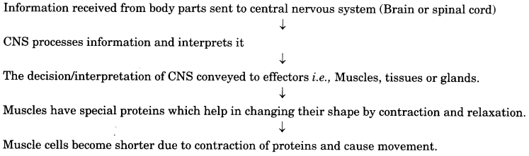 Control and Coordination 10 Extra Questions with Answers Science Chapter 7, 5