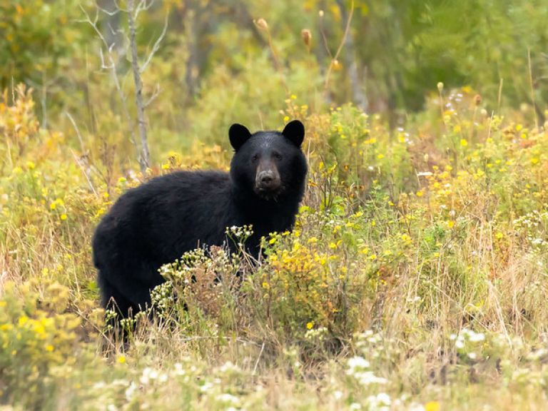 Close Encounter With A Bear