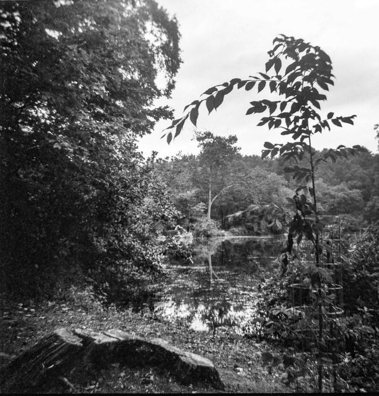 caged sapling, backlit, lagoon, Biltmore Estate, Asheville, NC, Kodak Duaflex III, Fomapan 200, Moersch Eco film developer, 9.6.20