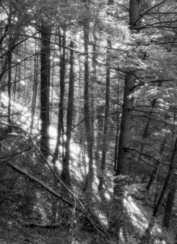 Forest Light #1