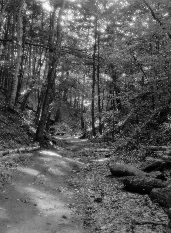 Forest Light #3