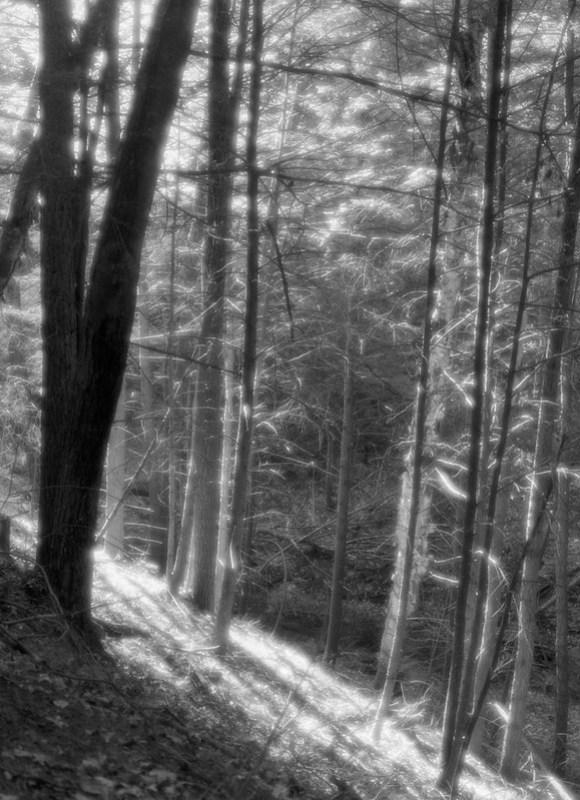 Forest Light #4