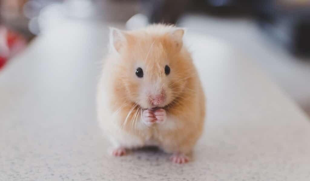 CRISPR-traite-la-dystrophie-musculaire-chez-la-souris