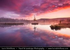 Czech Republic - Šumava National Park - Chalupska Slat / Moor at Sunrise