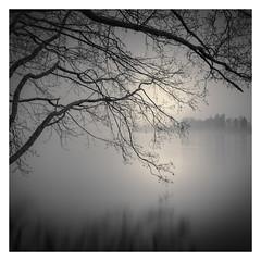 Lake | Branches
