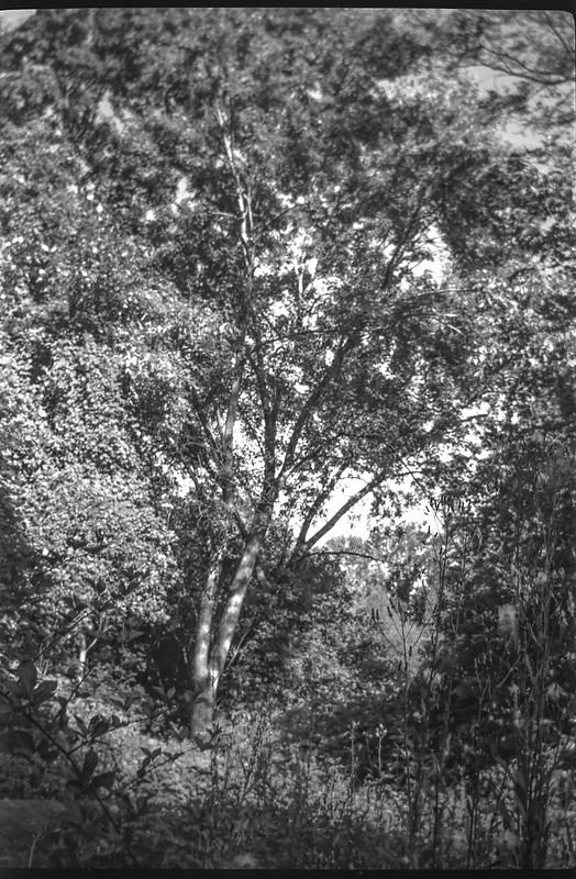 deep in the woods, buffer land, Sam's Club, West Asheville, NC, No. 1 Autographic Kodak Jr., Rollei Super Pan 200, HC-110 developer, 9.24.20