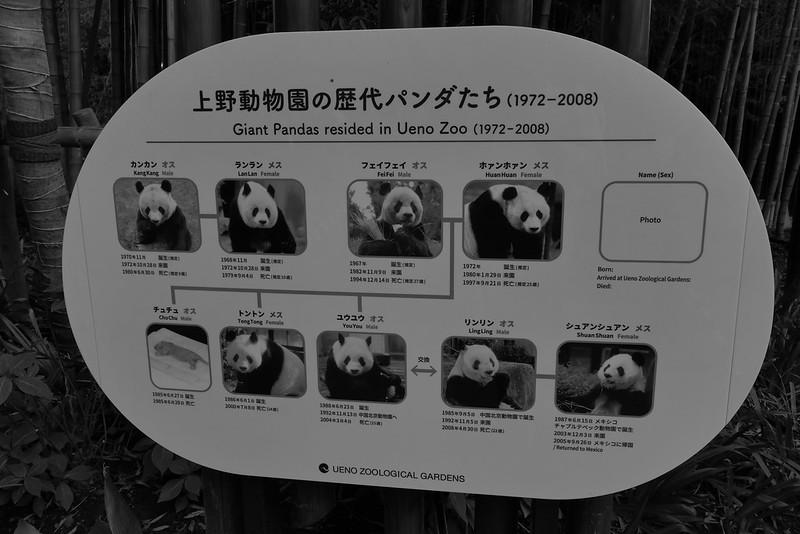 Giant panda family tree