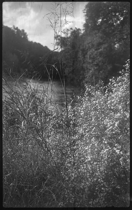 tall wild grasses, wildflowers, rural landscape, Asheville, NC, Kochmann Korelle folding 127 film camera, Kodak TMAX 400, HC-110 developer, 10.1.20