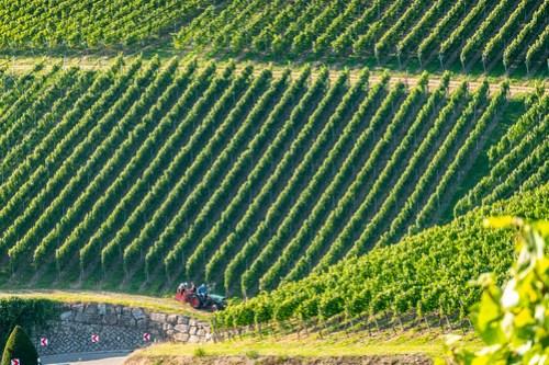 Durbacher Weinlandschaft