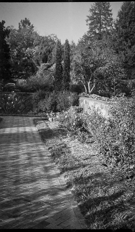 formal gardens, stone wall, brick walkway, flowers, trees, near sunset, Biltmore Estate, Asheville, NC, Kodak Bantam, folding 828 film camera, Kodak TMAX 400, HC-110 developer, 10.6.20