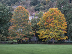 Two trees, Betws y Coed