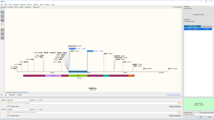 Working with GSL Biotech SnapGene 5.2.0 full license
