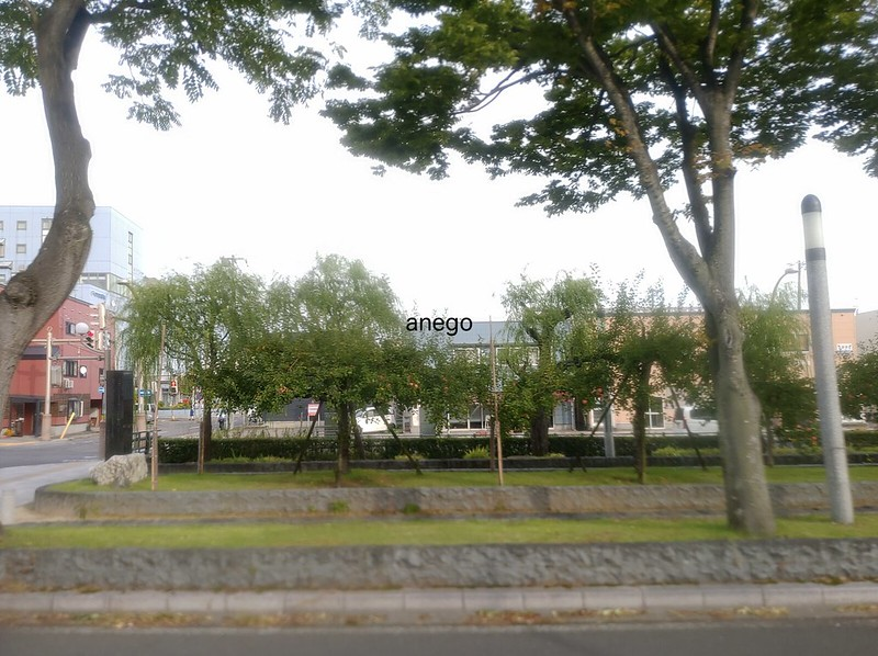 青森 街路樹が林檎
