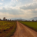 Path through the Fields