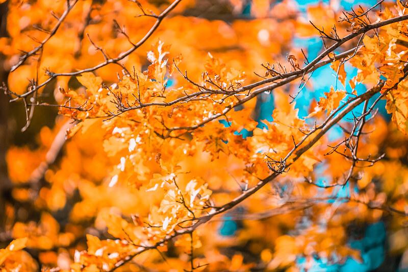 An Autumn Walk in Regent Park