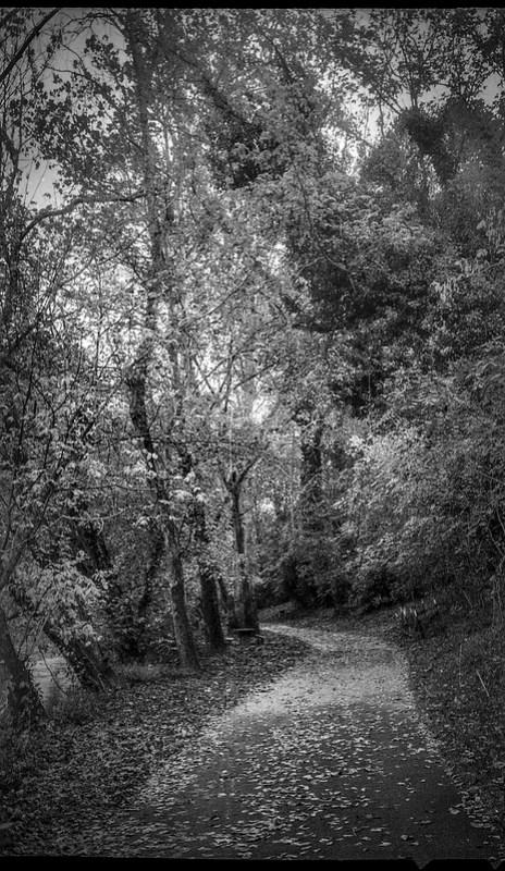 autumn landscape, pathway, trees, some ivy-covered, backlit, Hominy Creek RIver Park, Asheville, NC, Kodak Bantam, 828 film camera, arista.edu 200 re-spooled, Moersch Eco FIlm Developer, 10.23.20